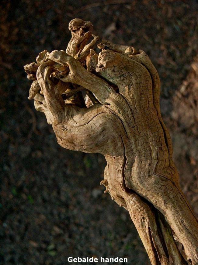 Vlierhout zonder bast en danig verweerd.Het deed mij aan een samengebalde vuist denken. Ongeveer dan.